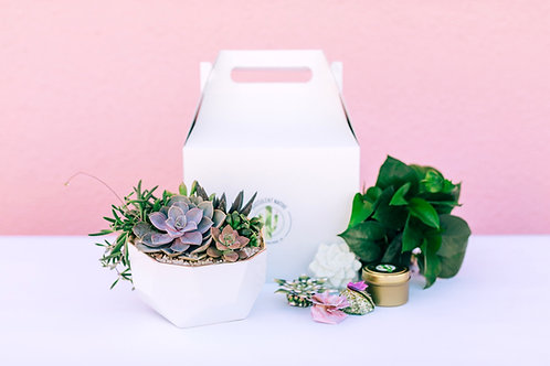 Ultimate Succy Love Gift Box