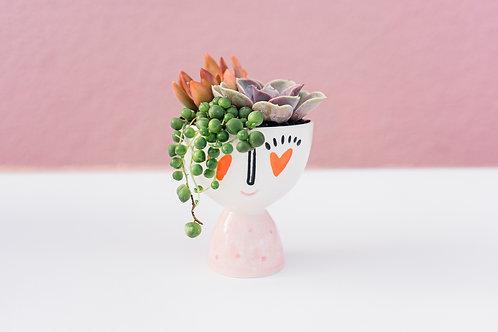 Madame Mini Succulent Arrangement