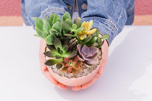 Scalloped Copper Bowl SucculentArrangement