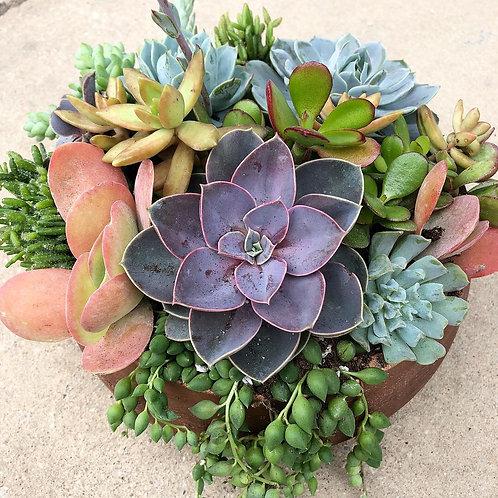 Bronze Bowl & Lavish Succulent Mix