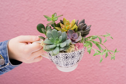 Classic Tea Time Mug Succulent Arrangement