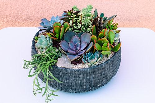 Grey Textured Bowl Succulent Arrangement