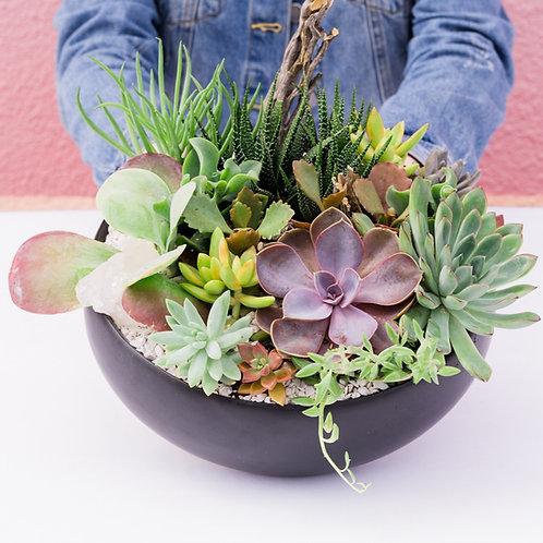 Modern Black Bowl Succulent Arrangement