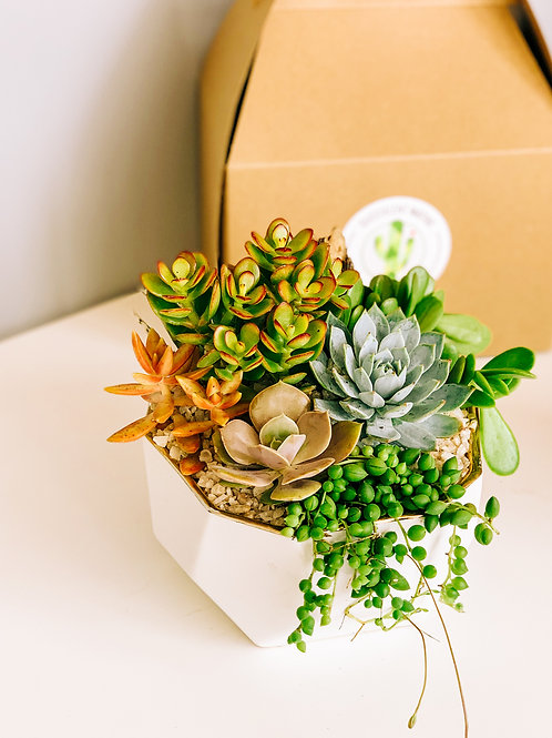 Large White & Gold Geo Bowl Succulent Arrangement