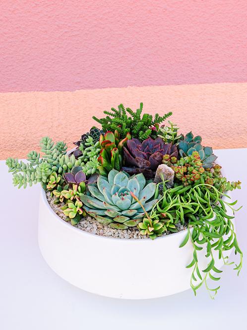 Modern White Bowl Succulent Arrangement