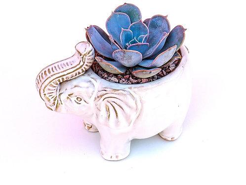 Rosie -- Elephant Rosette Arrangement