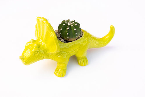 Mellow Yellow Triceratops Dinosaur Arrangement