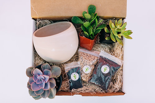 At-Home DIY Succulent Planting Party Kit