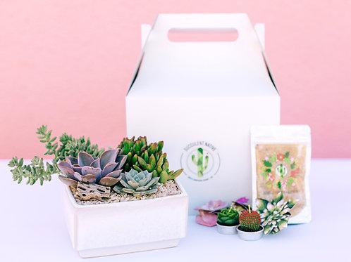 Premium Succy Love Gift Box