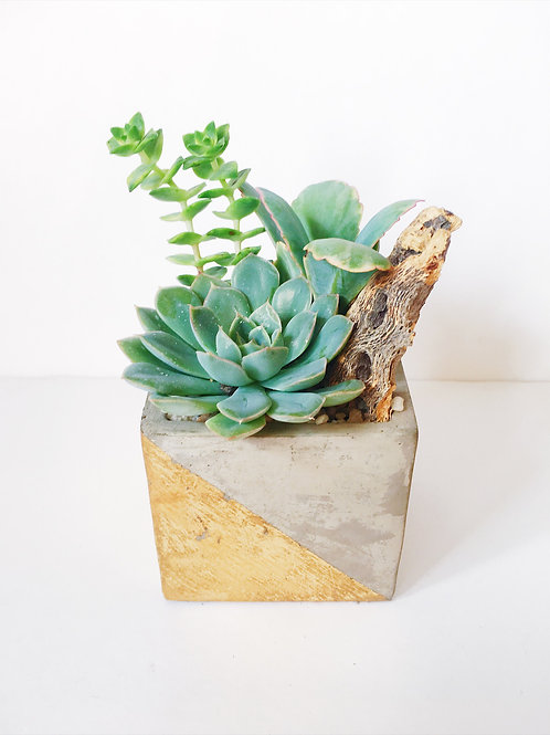 Gold Concrete Cube with Succulents