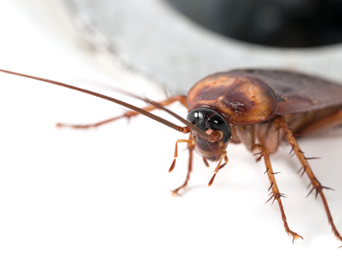 Pests & Vermin