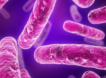 What is friendly bacteria?