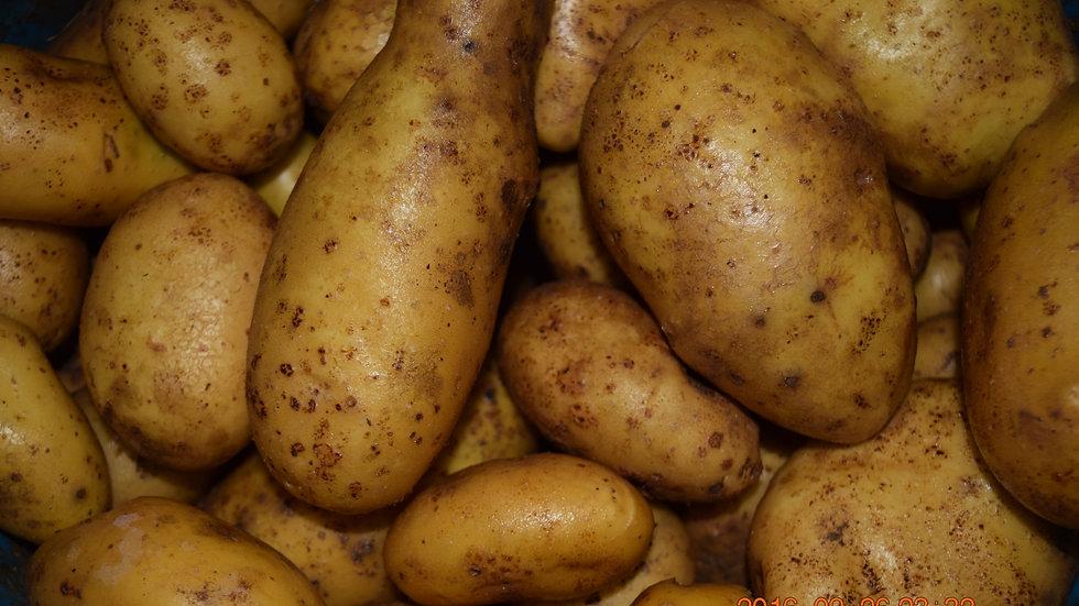 Pommes de terre  1kg