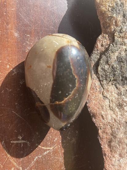 Brown Septarian Palmstone