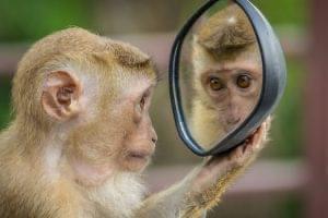 The Monkey of Self