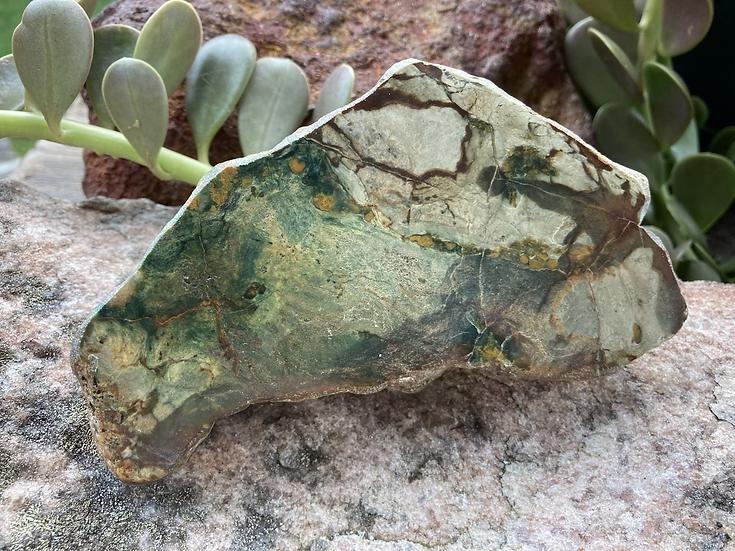 Australian Rainforest Rhyolite
