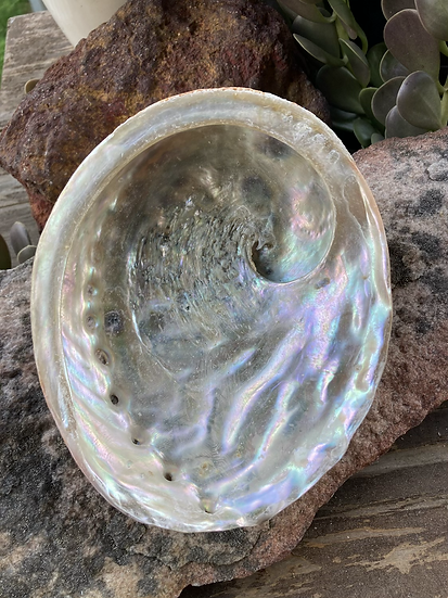 Abalone Shells for Smudging