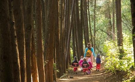 Importancia de las caminatas en el bosque.