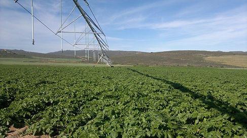 Potato Fields at Saamstaan