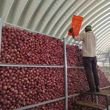 Market at the doorstep for onion farmers in Maharashtra: The VPFPC experience