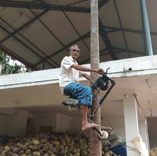From grassroots to tree-tops: A farmer's innovative Arecanut tree climber