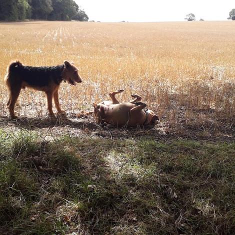 DogEden_Walkies