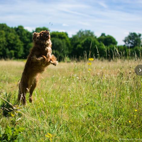 DogEden_Jump.jpg