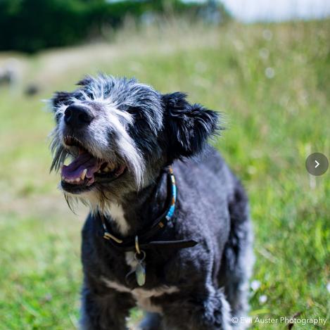 DogEden_HappyDog.jpg