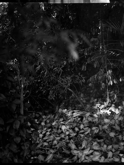 Untitled35 (2)38_web.jpg