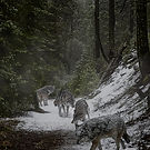 forest-2056852_1920_edited_edited.jpg