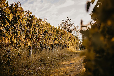 Almaranto - 097 Vines copy.jpg