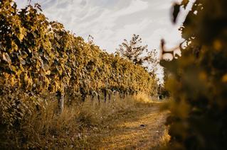 Anima Lounge & Bistro Vineyards