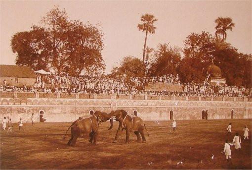 elephant fight.jpg