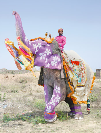 indias-painted-elephants-460.jpg