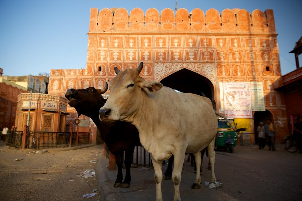 Gates of Jaipur
