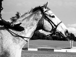 Natural Horsemanship VS Classical Horsemanship