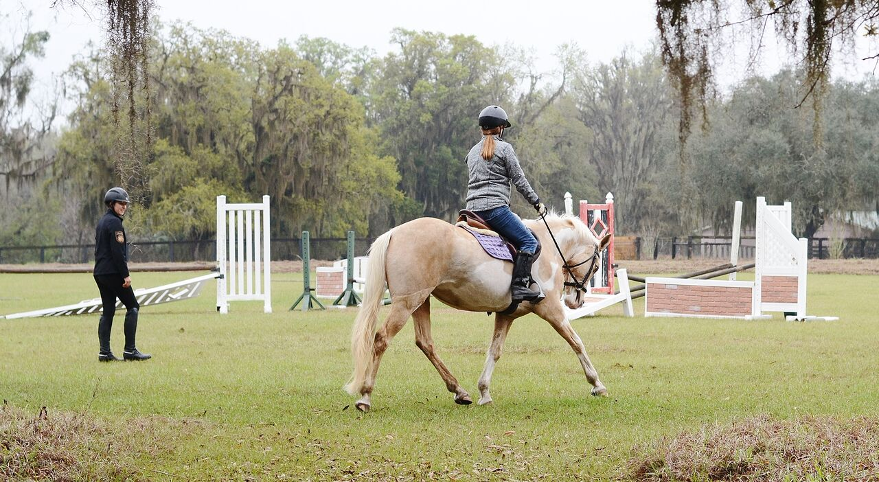 Magnifinity Equestrian Sport Services Ocala Fl