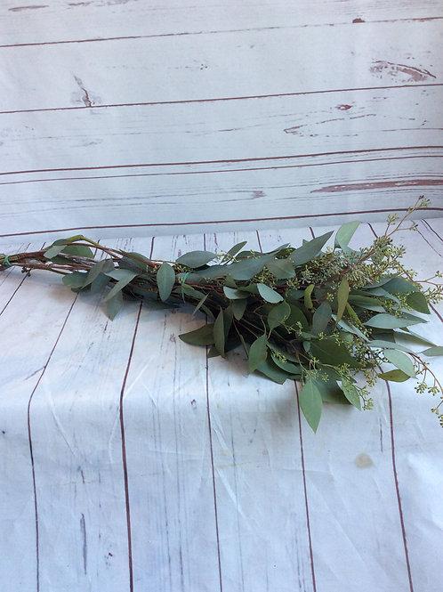 SeededEucalyptus