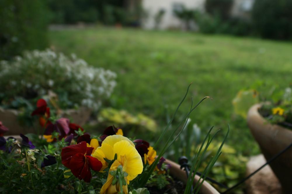 ornamental flower bed