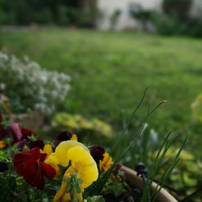 Un si charmant jardinet