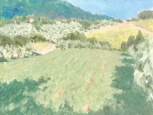 Alfalfa field outside Pontassieve, Italy