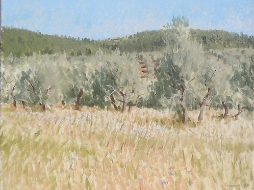 Olive Trees and Cicoria flowers
