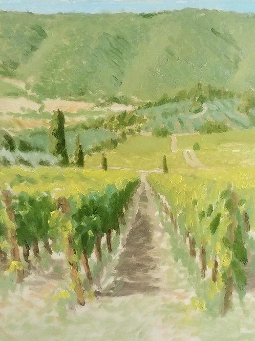 Veroni Vineyards