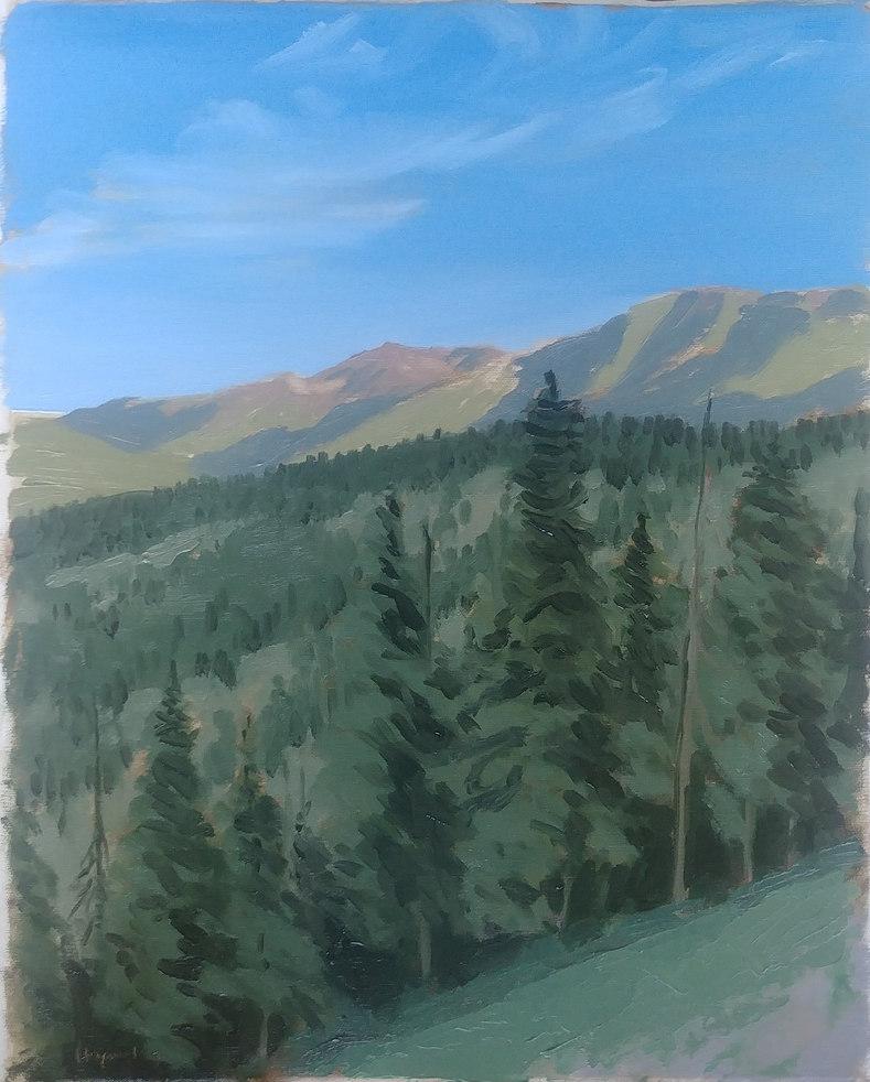 Pines on Haystack Mt., Wyoming