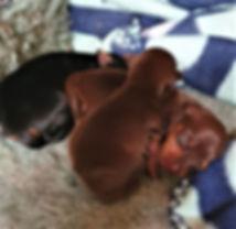 Tara Pups.jpg