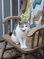 shiralea cattery