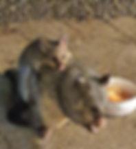 Possum 2020.jpg