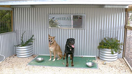 shiralea pet resort