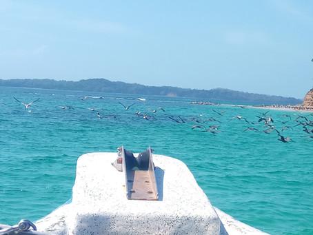 Discovering Pearl Islands, Panama