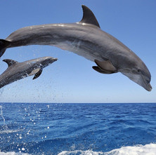 delfines-saltando,-mar-190799.jpg